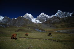 Snow Peaks And Mountains In Peru Royalty Free Stock Image
