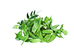 Snow peas. With vine on a white background Stock Photo