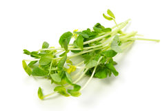 Snow peas leaf Royalty Free Stock Photo