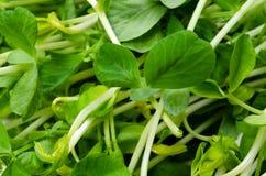 Snow peas leaf Stock Image