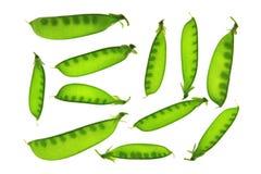 Snow peas, Pisum sativum, Pisum saccaratum Stock Photo