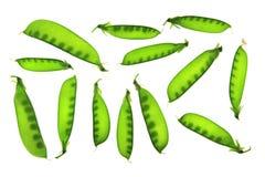 Snow peas, Pisum sativum, Pisum saccaratum Royalty Free Stock Photo