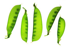 Snow peas, Pisum sativum, Pisum saccaratum Royalty Free Stock Image