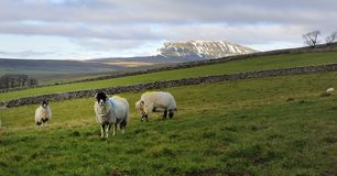 Snow on Pen-y-ghent Royalty Free Stock Image