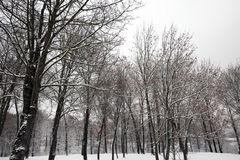 Snow drifts in winter Royalty Free Stock Image