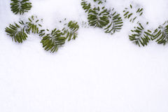 Snow pine branches frame Royalty Free Stock Photography