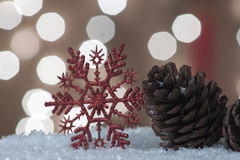 Snow Pine cones Stock Photos