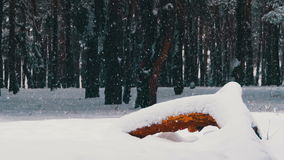 Snow And Pine Forest - Christmas Background. Winter forest with snowy tree. Snow falling and covered fir trees on a winter day. Winter background. Snow comes stock footage