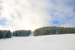 Snow pine forest Stock Photo