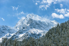 Snow pine and Gongga snow mountain Royalty Free Stock Images