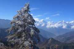 Snow pine on Niubei mountain Stock Photo