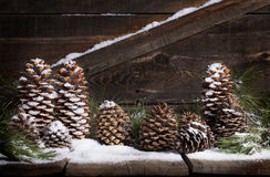 Snow Pinecones Royalty Free Stock Photography