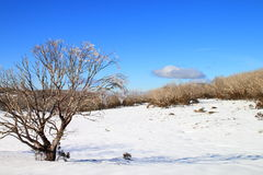 Snow Plains Stock Photo