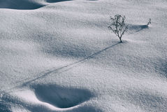 Snow and plant Royalty Free Stock Photography