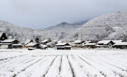 Snow plantation. A snow filled plantation with traditional village housees and mountain at the background Stock Photo