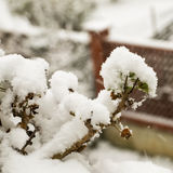 Snow on the plants Stock Images