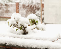 Snow on the plants Stock Image