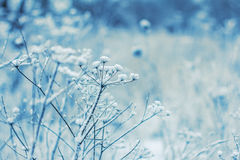 Snow on plants Royalty Free Stock Photos