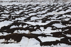 Snow on the plowed field Stock Image