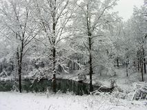 Snow Pond. Snow covered woods Royalty Free Stock Images