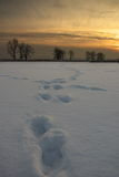 Snow prints Stock Photos