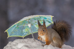 Snow protection Royalty Free Stock Images