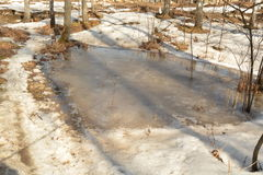 Snow and Puddle in Spring Forest Stock Images
