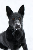 Snow Puppy Stock Images