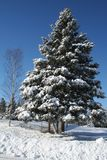Snow in Quebec. Canada, north America. Royalty Free Stock Image