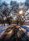The snow queen Avenue. After a heavy fall Avenue sunshine projection on the road Royalty Free Stock Photos