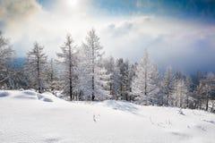 Snow räknade trees i bergen arkivbild