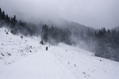 Snow räknade trees i bergen för ligganderussia för 33c januari ural vinter temperatur Royaltyfria Foton