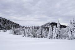 Snow räknade trees i bergen för ligganderussia för 33c januari ural vinter temperatur Arkivfoton