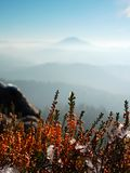 Snow in  red blooming of heather bush on cliff in park. Hilly countryside with long valley full of autumn fog. Stock Photo