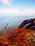 Snow in red blooming of heather bush on cliff in park. Hilly countryside with long valley full of autumn fog. Royalty Free Stock Photo