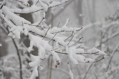 Snow refers to forms of ice crystals that precipitate from the atmosphere (usually from clouds) Stock Photography
