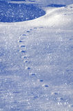 Snow relief patterned animal tracks in the snow. Winter backgrou Stock Photography