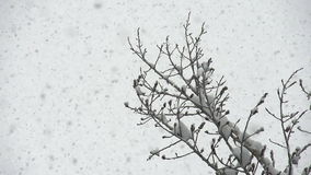Snow Rises to the Sky stock video