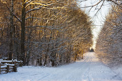 Snow road Stock Image