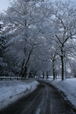 Snow Road 2. Snowy road and snow on trees english countryside Stock Photography