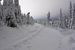 Snow road. Hare's traces on snow forest road Stock Photography