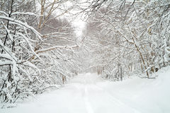 Snow road Royalty Free Stock Photo