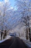 Snow road. Scenic view of snow covered trees lining road receding into distance, winter scene Stock Image