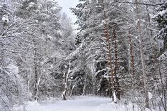 Snow road in the forest covered with white, snow cover. And the beauty of its he beckons to the country. A simple forest of wonders stock images