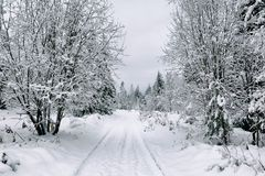 Snow road in the forest in winter in Russia Royalty Free Stock Photos