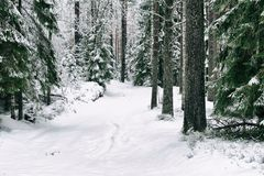 Snow road in the forest in winter in Russia Royalty Free Stock Images