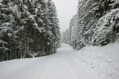 Snow on road with pine tree forest. In winter Royalty Free Stock Photography