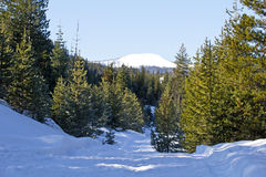 Snow Road and Snowy Mountain Forest. A snowy mountain stands in the distance of a snow covered forest road in central Oregon stock photos