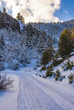 Snow road at Ziria mountain with fir trees covered with snow on a winter day, South Peloponnese, Greece Stock Photo