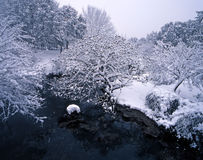 Snow sakura Royalty Free Stock Images
